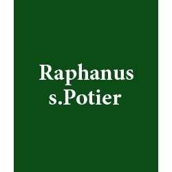 RAPHANUS S. POTIER